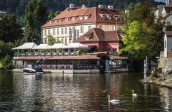 Cigni sul fiume della Moldava, Praga Fotografie Stock Libere da Diritti
