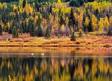 Cigni sul lago Turnagin, Alaska Fotografie Stock