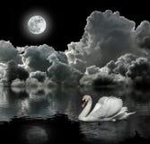 Cigno bianco alla notte Fotografie Stock Libere da Diritti
