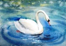 Cigno bianco del bello uccello elegante Immagini Stock