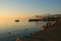 Cigno che galleggia lungo il litorale della polizia del lago Immagini Stock Libere da Diritti