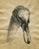 Cigno disegnato a mano Immagini Stock