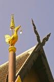Cigno dorato Fotografia Stock