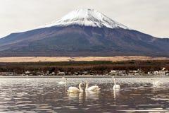 Cigno nel lago Yamanaka Fotografia Stock Libera da Diritti