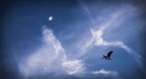 Cigogne Image libre de droits