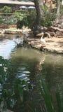 Cigogne Photo libre de droits