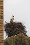 Cigogne Photos libres de droits
