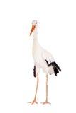 Cigogne blanche sur le blanc Photo libre de droits