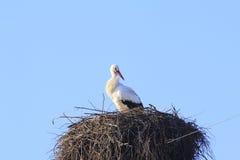 Cigogne dans le nid Photos libres de droits
