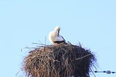 Cigogne dans le nid Photos stock