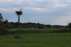 Cigogne dans le nid sur le poteau photographie stock libre de droits