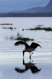 Cigogne de marabout devant le lac Nakuru, Kenya Photos libres de droits