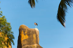 Cigogne de marabout sur la roche Photos stock