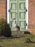 Cigogne devant la porte d'église Photographie stock