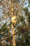 Cigogne en bois Photographie stock