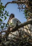 Cigogne en bois Images libres de droits