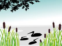 Cigogne en nature sauvage Images stock