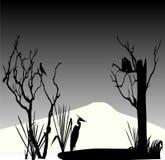 Cigogne et couples de silhouette de pigeon Image stock