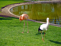 Cigogne et flamant sur un zoo photos stock