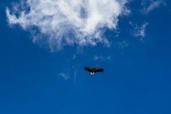 Cigogne montant dans le ciel bleu avec les nuages blancs Images stock