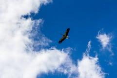 Cigogne montant dans le ciel bleu avec les nuages blancs Photo libre de droits