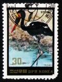Cigogne noire, vers 1984 Photo libre de droits