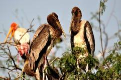 Cigogne peinte Photo libre de droits