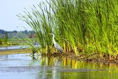 Cigogne près au fleuve Photographie stock