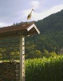 Cigogne se reposant sur un râtelier Photographie stock libre de droits