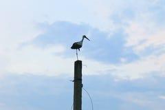 Cigogne se tenant sur un poteau concret photos libres de droits