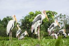 Cigogne sur le jardin Images libres de droits