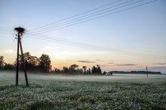Cigogne sur le lever de soleil Image stock