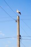 Cigogne sur le poteau de l'électricité Photographie stock