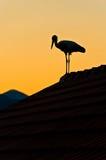 Cigogne sur le toit Photo libre de droits