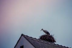Cigogne sur le toit Photos stock