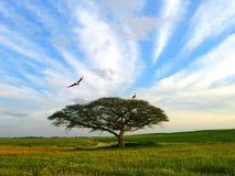 Cigognes Images libres de droits