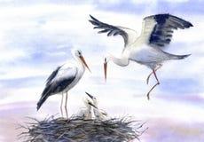 Cigognes dans le nid illustration de vecteur