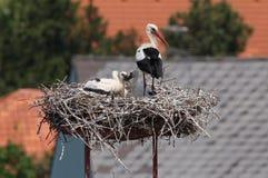 Cigognes dans le nid devant des toits Images stock