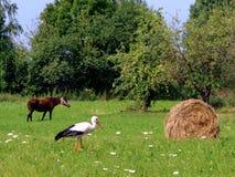 Cigognes et une meule de foin village Lumi?re du jour Photographie d'?t? photographie stock