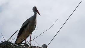Cigognes se reposant dans un nid sur les lignes électriques à haute tension d'un pilier sur le fond de ciel banque de vidéos
