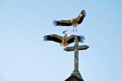 Cigognes sur l'église Images stock