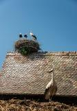 Cigognes sur le nid de toit, France Photos libres de droits