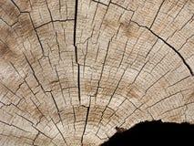 Ciie bagażnika stary drzewo z pęknięciami, opróżnia przestrzeń dla teksta, w niskim prawym kącie czarny tło, Zdjęcia Royalty Free
