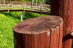 Ciie drzewa malującego z brown farbą w słońcu fotografia stock