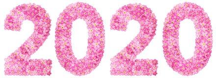 Cijfer 2020 van roze die vergeet-mij-nietjebloemen, op wit worden geïsoleerd Stock Foto's