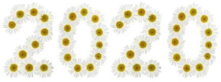 Cijfer 2020 van witte die bloemen van kamille, op wit worden geïsoleerd Stock Foto