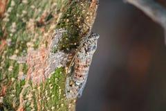 Cikada på ett träd Royaltyfri Foto