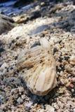 cilacap do karang fotografia de stock