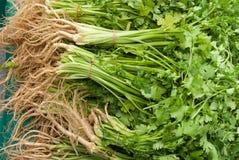cilantro οργανικό στοκ εικόνες