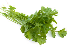 Cilantro. Bunch of fresh cilantro isolated on white stock photos